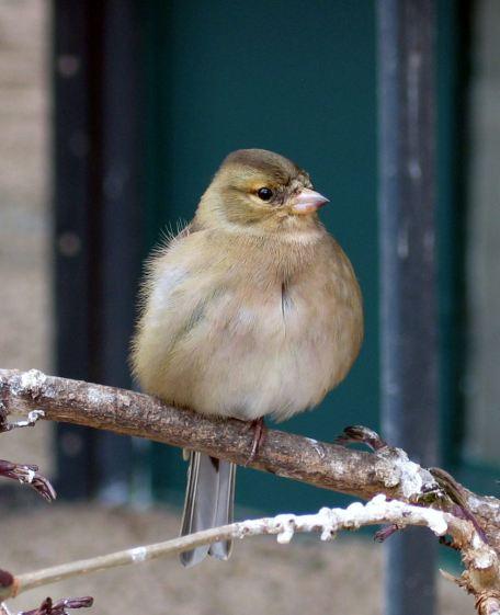 bird-1408461